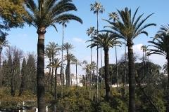 Park v Seville