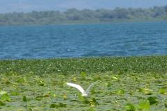 Skadarské jezero a ptačí rezervace