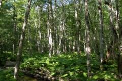 Prales v NP Biogradska gora