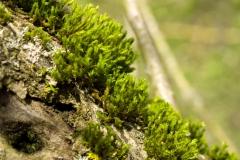 Mech na stromě