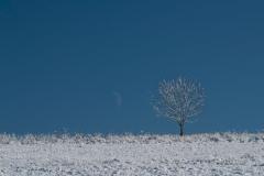 Stromeček s měsíčkem