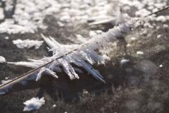 Ledové krystalky na slámě trávy