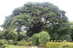 Zahrada u Ghándího vily