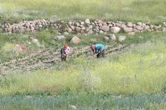 9.den- Lidé to pracují na polích už před sedmou