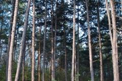 2.den- probuzení v pražském lese.