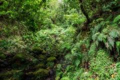 Subtropický prales s Vavříny