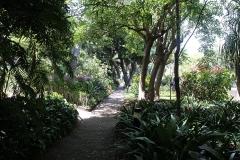 Zahrada ve Funchalu - hlavním městě ostrova
