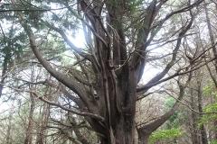 Cypřišový les