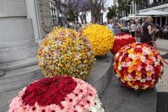Květinové koule - možno vidět jen na Madeiře