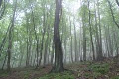3.den- Les v Lamač