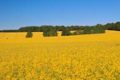 Krajina v Dolním Sasku (Niedersachsen)