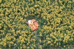 Piknik milenců ve slunečnicovém poli