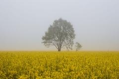 Ranní mlha nad polem