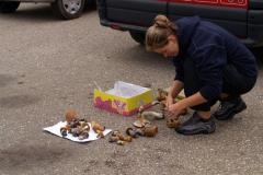 Sběr hub při zastávkách na čurání