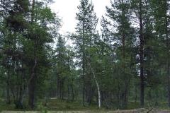 Finský les