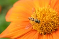 Květina s včelkou