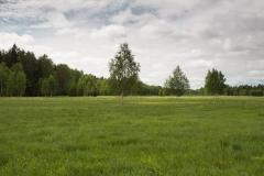 Okolní krajina - lesy, břízy, louky