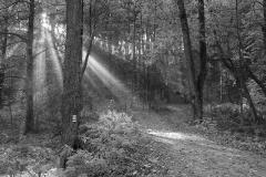 <!--:cs-->Paprsky slunce<!--:--><!--:en-->Rays of the sun<!--:-->