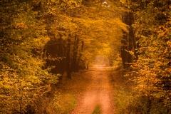 <!--:cs-->Cesta<!--:--><!--:en-->The road<!--:-->