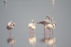 Plameňáci v deltě Rhony