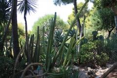 Botanická Zahrada v Monaku