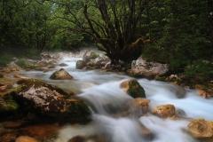 Potok v údolí Zadnjice