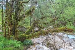 Horský prales