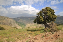 Opuštěný strom