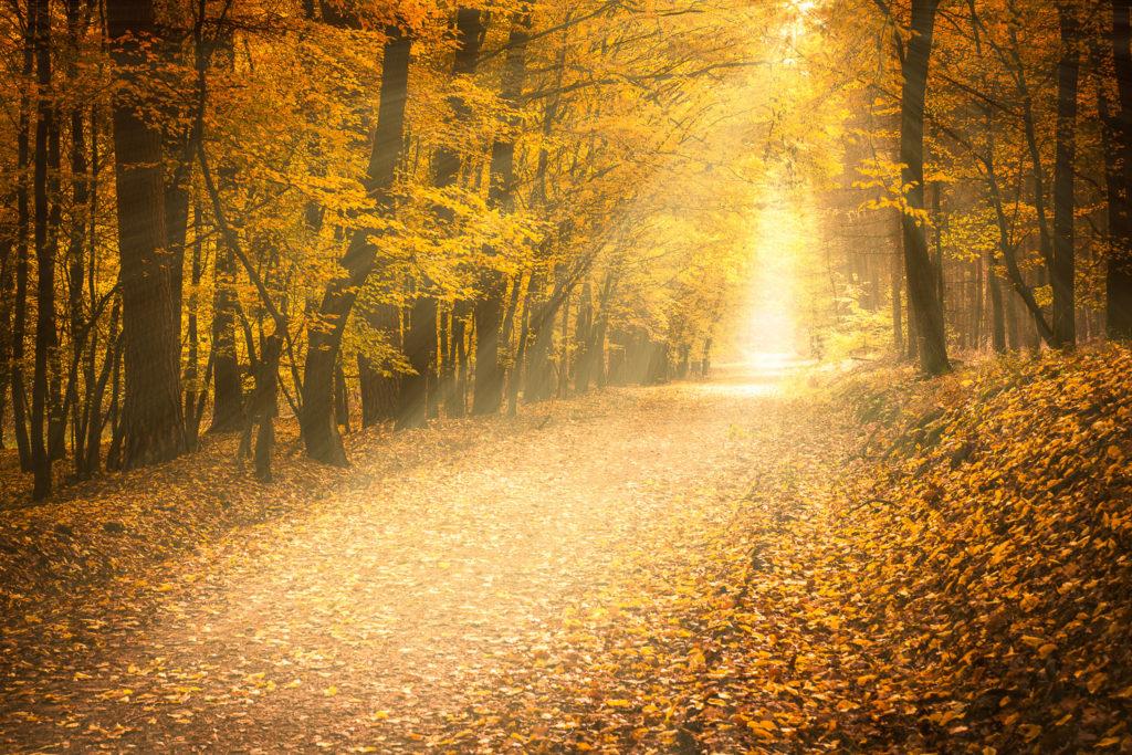 Český ráj - podzimní les