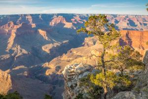 Grand Canyon se stromem