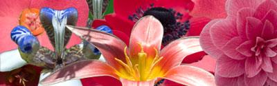 botanicka-zahrada