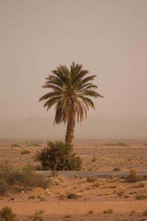 maroko-182.jpg