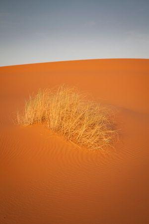 maroko-207.jpg